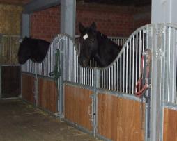 Rubber Mat Paarden stallen